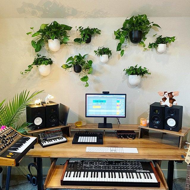 montar estúdio musical com plantas