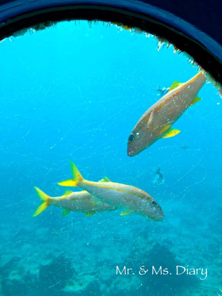 日本沖繩 4 天 3 夜旅遊規劃--瀨長島飯店、賞鯨、螃蟹吃到飽、海生館 22