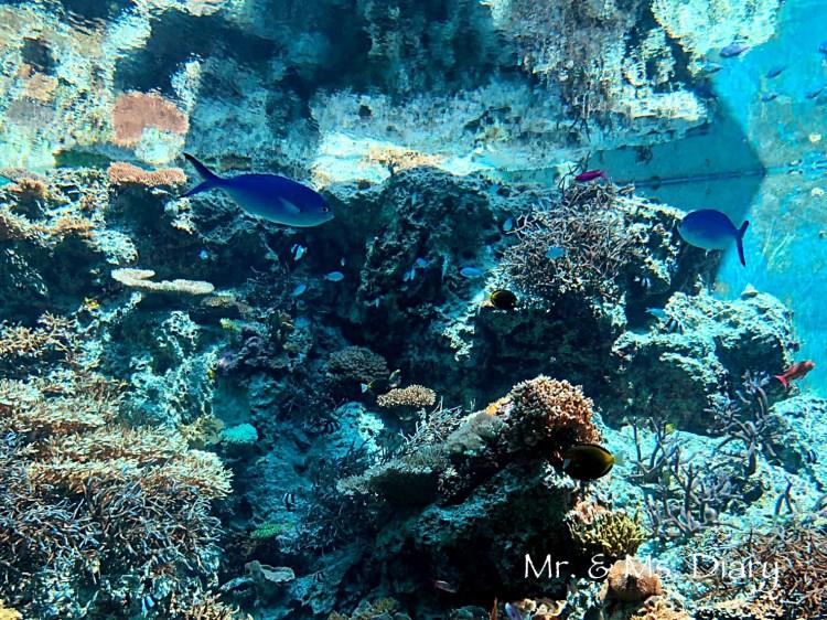 日本沖繩 4 天 3 夜旅遊規劃--瀨長島飯店、賞鯨、螃蟹吃到飽、海生館