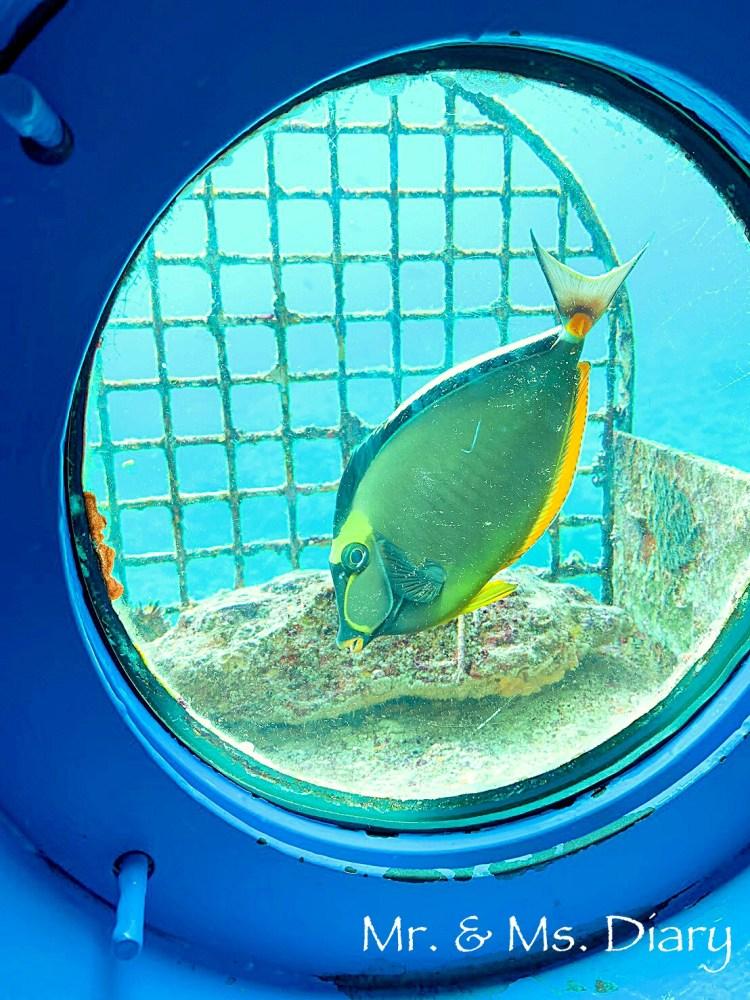 日本沖繩 4 天 3 夜旅遊規劃--瀨長島飯店、賞鯨、螃蟹吃到飽、海生館 23