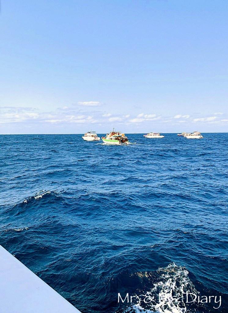 日本沖繩 4 天 3 夜旅遊規劃--瀨長島飯店、賞鯨、螃蟹吃到飽、海生館 17