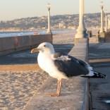 Mission Beach,CA