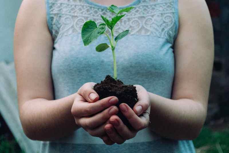 mujer sosteniendo planta