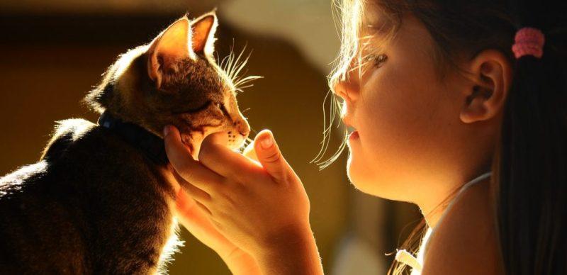 هل عليك شراء حيوان أليف لأطفالك؟