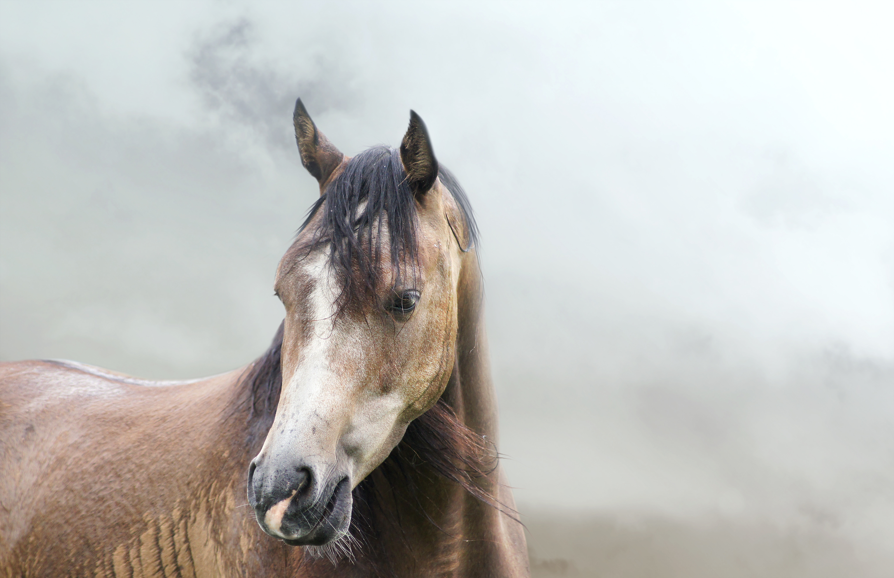 Murdoch S Blog The Dirt Wildfire Smoke And Horse Health