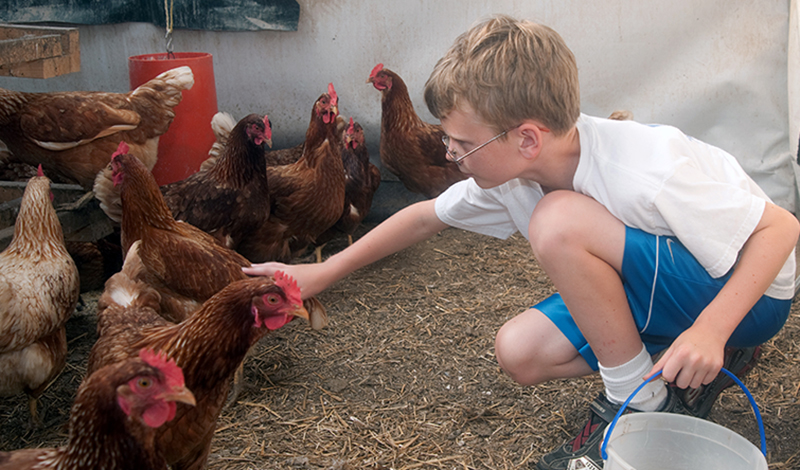 Raising chickens is a learning experience for the whole family.