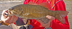 North Fork Shenandoah River Smallmouth