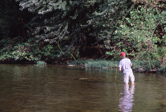 Smallmouth Feed on Shiners in the Shallows