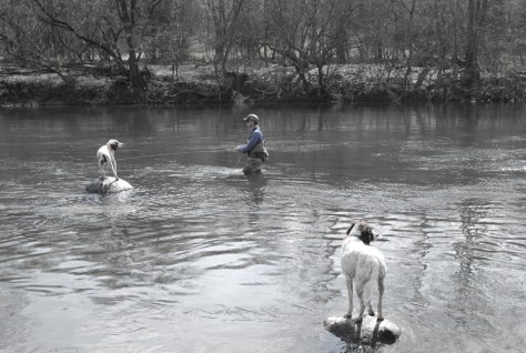 North Fork Shenandoah River Fly Fishing with the Murray's Fly Shop support staff - Photo Credit: Kelly Murray