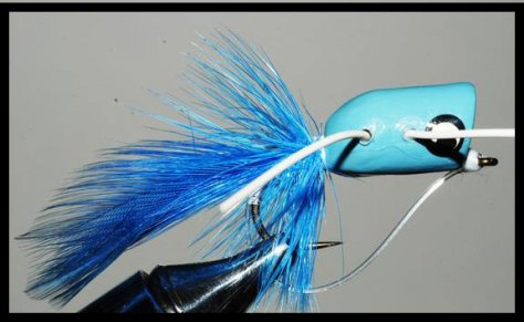 Shenandoah Blue Popper Blog- Murray's Fly Shop- Edinburg, Virginia