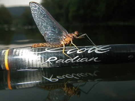 Hexagenia Mayfly Spinner FlyFishing Scott Radian Fly Rod