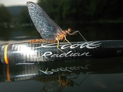 Hexagenia Mayfly Spinner FlyFishing Scott Radian Fly Rod