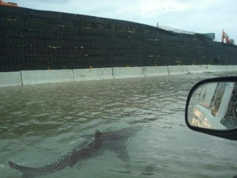 Fake photo of a shark swimming down a highway.