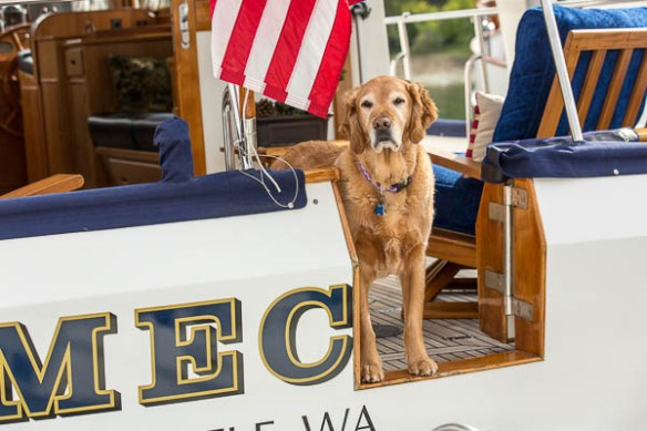 Archimedes Grand Banks Rendezvous doggy