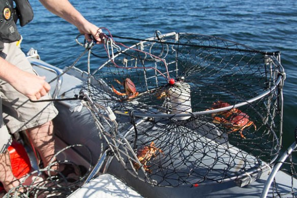 mv Archimedes crab catch