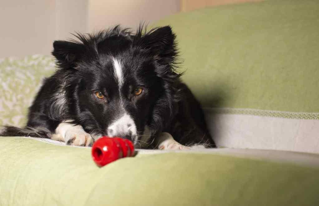 Beschäftigung für den Hund mit einem Spielzeug aus Naturkautschuk