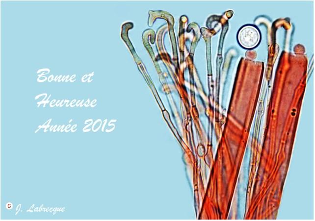 Carte de souhaits des Fêtes 2015 -