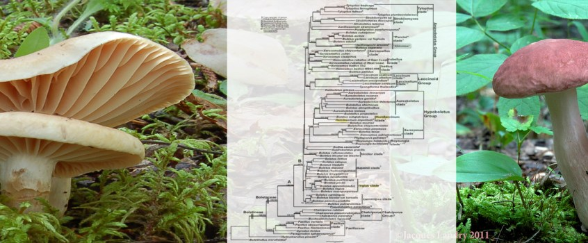 Nom de champignons (Janvier 2015)