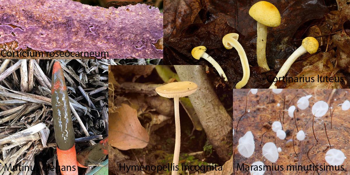Les découvertes 2015 sur Mycoquébec.