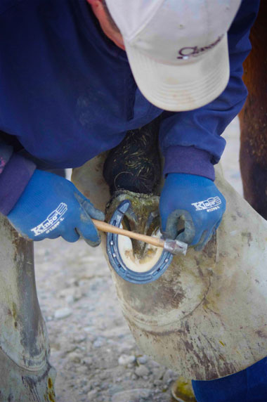A farrier at work on a horse