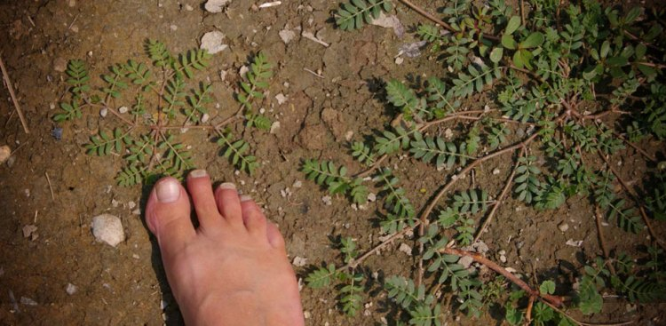 Bare foot in weeds