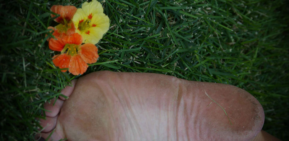 Bare foot in grass
