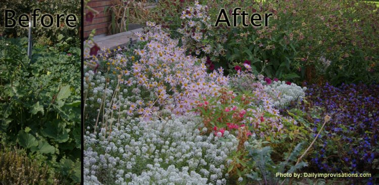 Before and After weeding