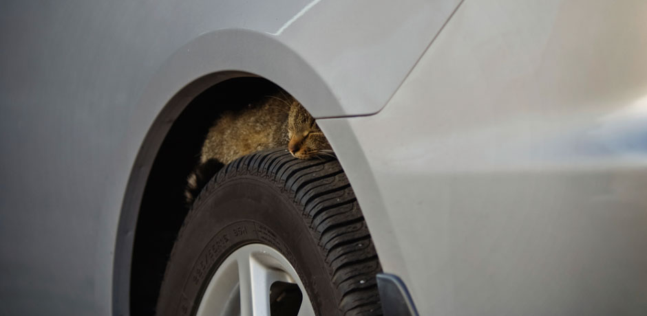 Cat on a care tire