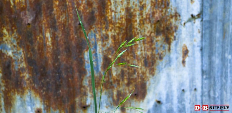 Weed in front of barn