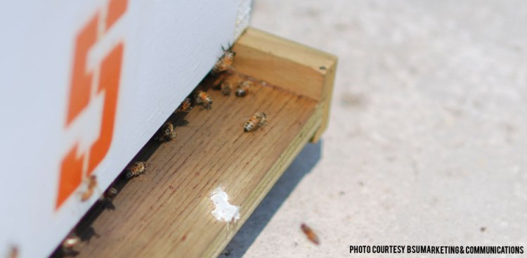 012815_RoofTopBees2