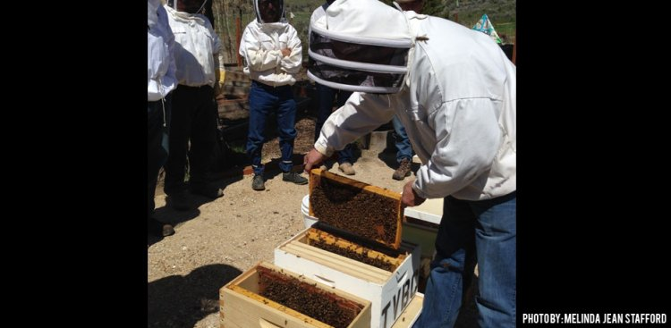 02112016_installing-bees