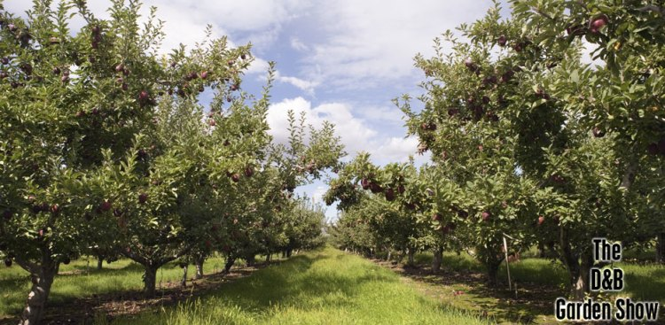 02202016_applea-orchard-picture-for-the-DB-Garden-Show
