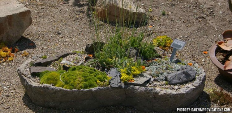 05032016_container-planting-low-water-Idaho-Botanical-Gardens-shallow-rock-container