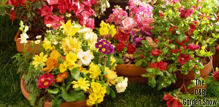 05112016_Garden-Show-pictures-of-flowers