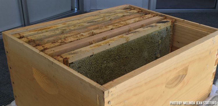 03142017+Equipment-From-Dead-Hive_box-of-frames