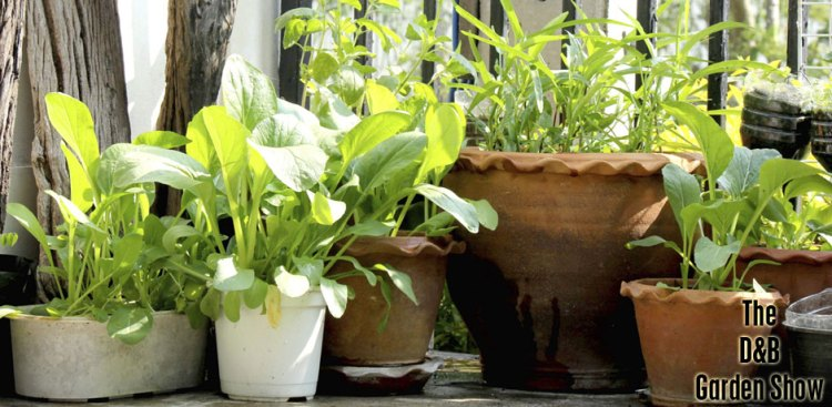 05102017_potted-plants