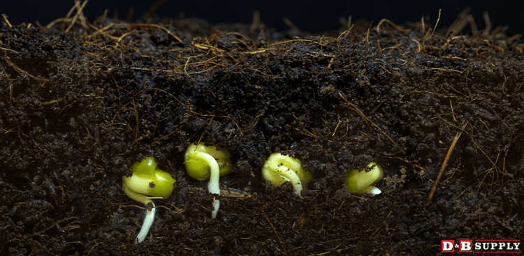 A Cool Start to the Summer - Seeds Germinating in Soil