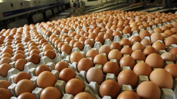986041-eggs