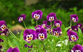 6971875-funny-flowers-pictures