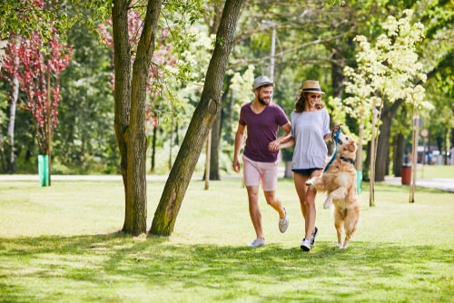 Couple walking dog in a sunny park