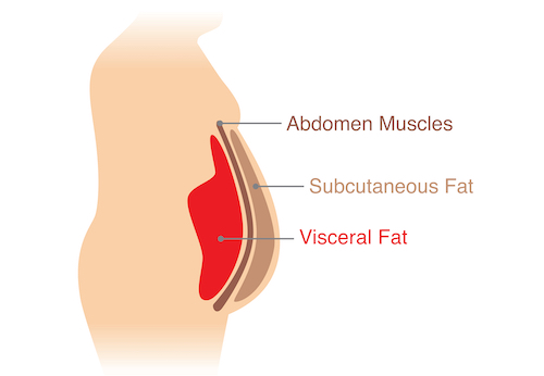 Stomach fat types diagram