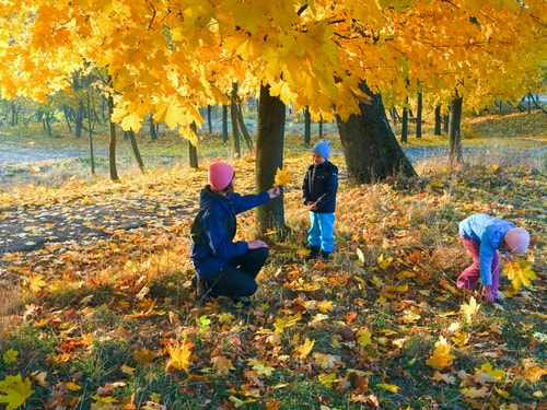 Mom and kids playing with autumn leaves