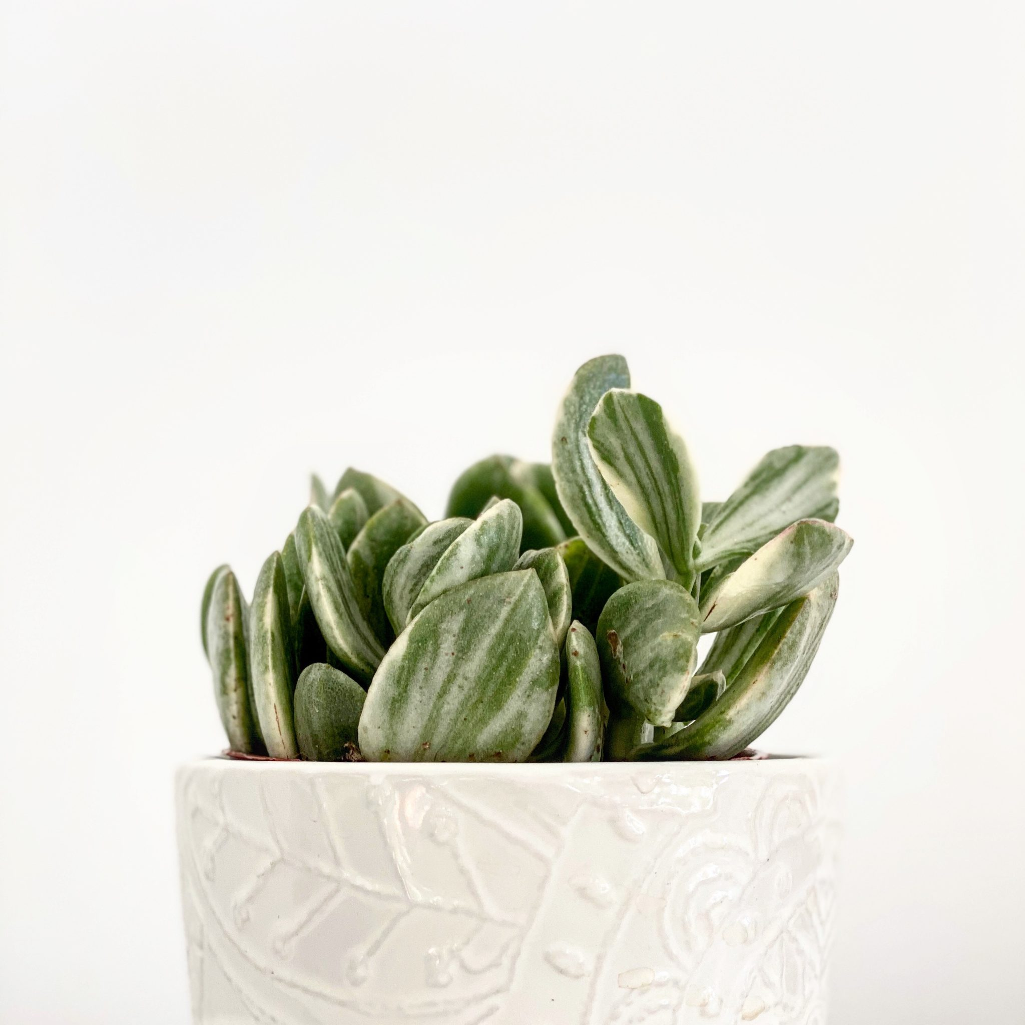 Sansevieria Plant Feng Shui 7 feng shui plants that are easy to keep alive - my tasteful