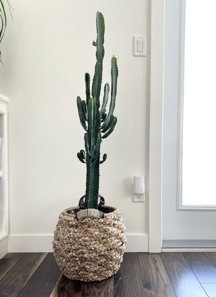 Tall Indoor Plants   7 Best Large Houseplants to Grow in ...