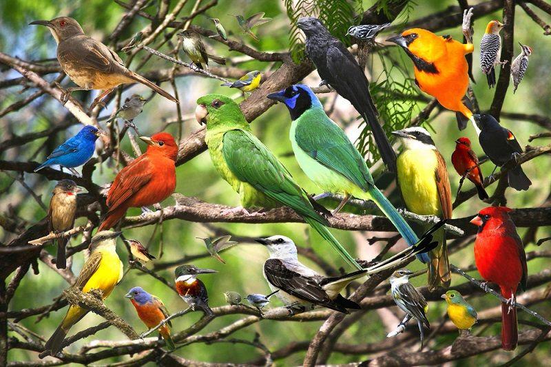 kuş türleri ile ilgili görsel sonucu