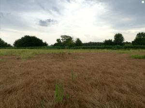 Grundstück 1719, Blick nach Norden, flachliegendes, Braunes Gras