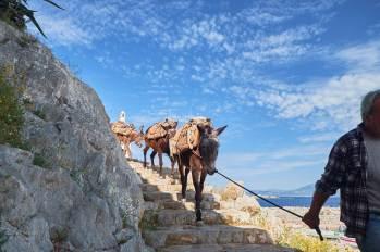 Les ânes, présents partout