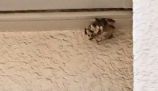 自宅玄関の真上に蜂の巣ができて自分で駆除しました