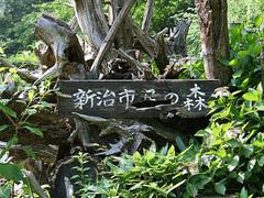 Niiharu_forest_02