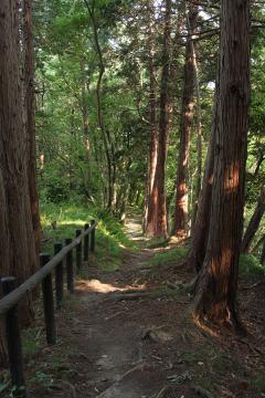 Kamariya_forest_18